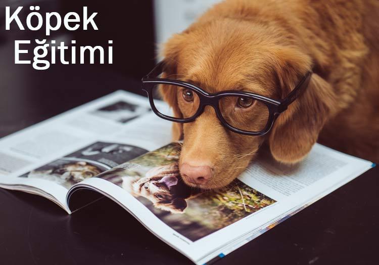 Köpek nasıl eğitilir