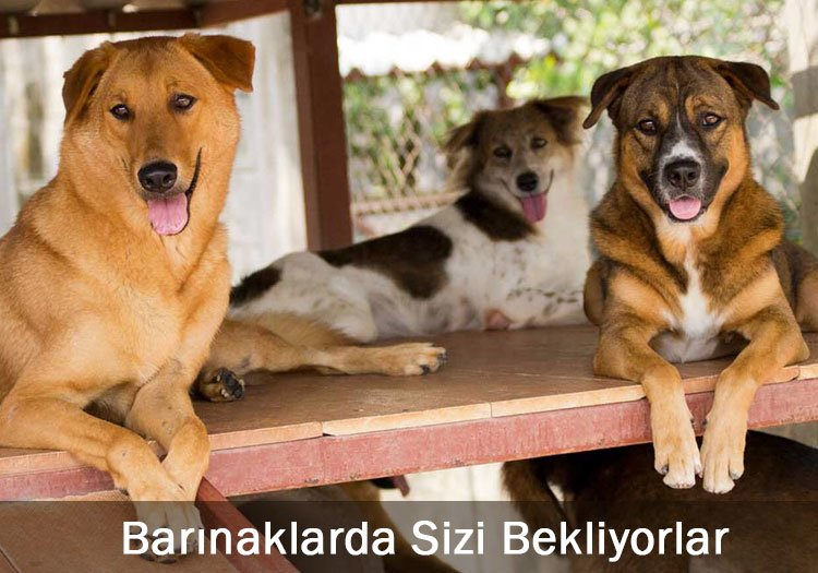 köpek (hayvan) barınakları