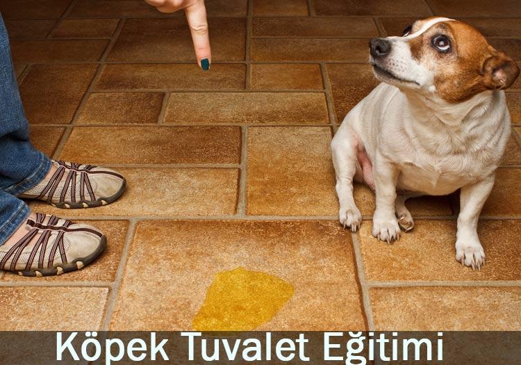 köpek tuvalet eğitimi